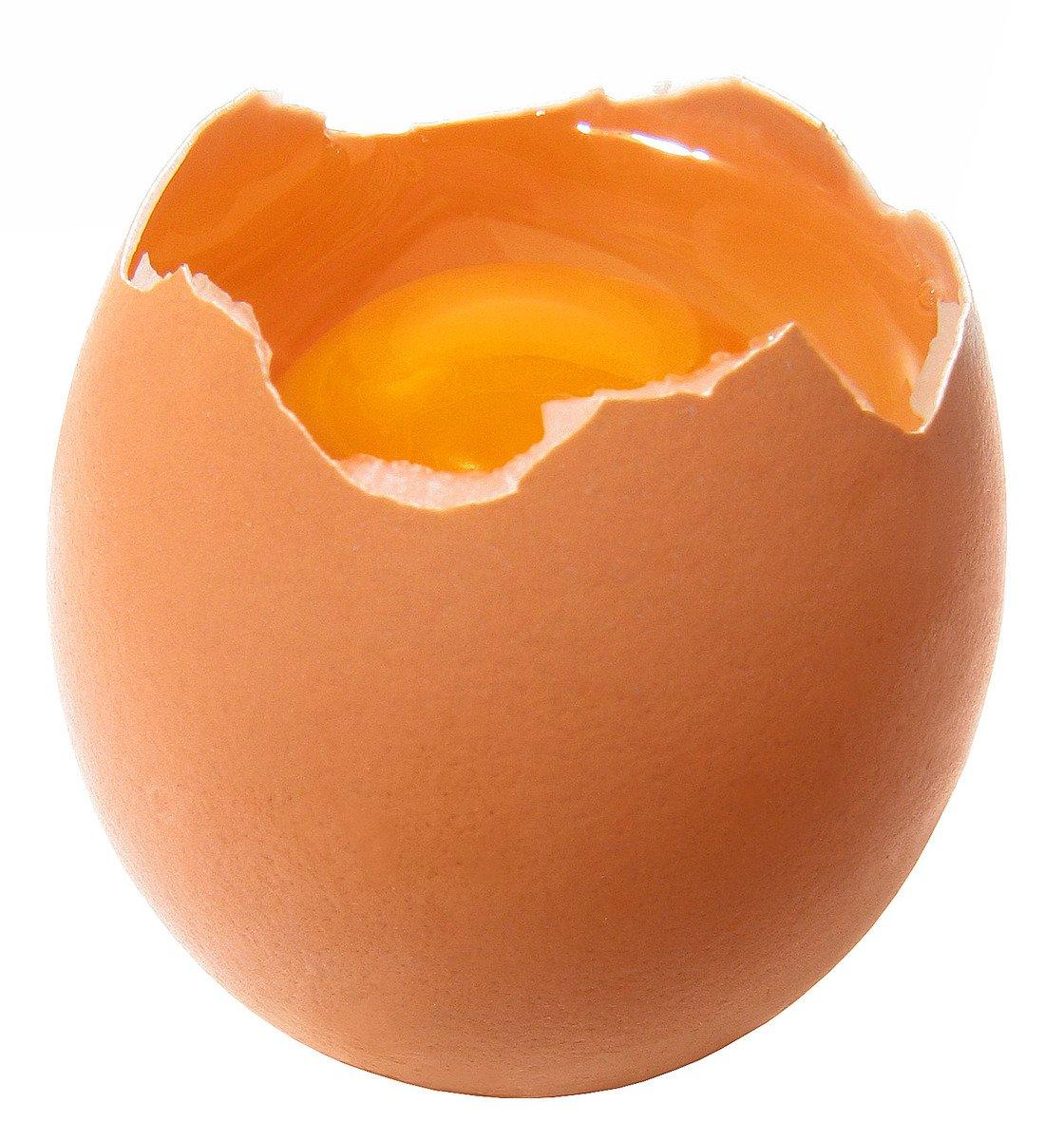Broken Egg Seed Starter