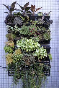 Vertical Planting