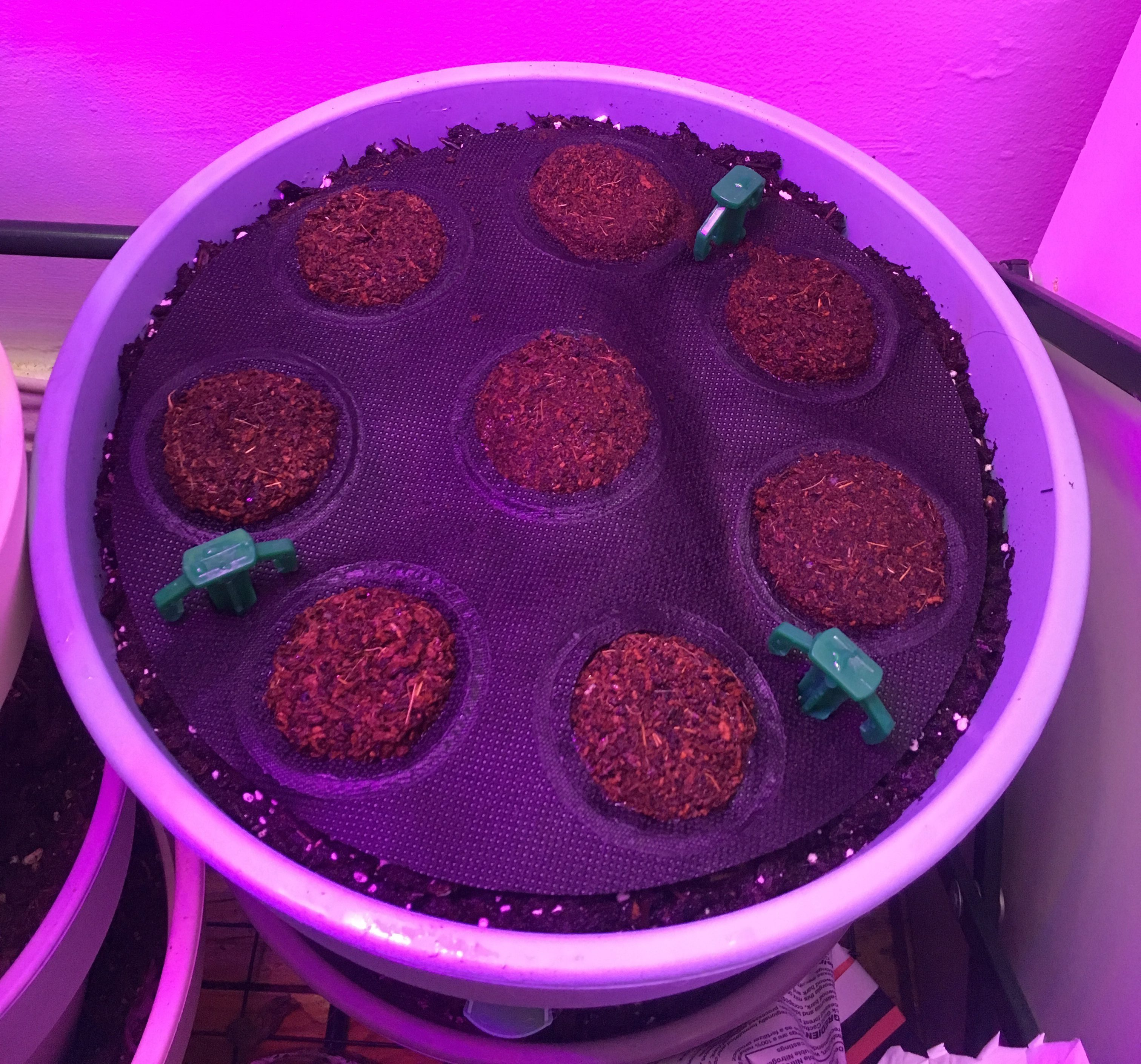 Herb Seed Sheet Day 1